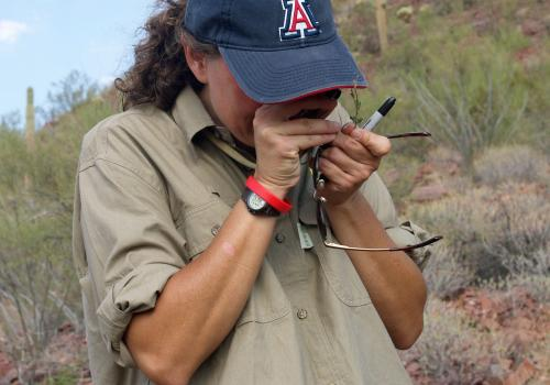 UA associate professor Betsy Arnold looks through a loupe to identify a plant found during a BioBlitz excursion in Saguaro National Park.