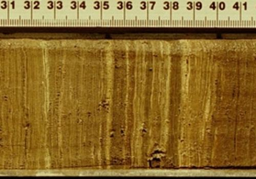 This sediment core taken from Lake Bosumtwi, Ghana shows the layers of sediment that were deposited in the lake annually. The layers provide a means of reconstructing the region's past climate. A meter stick lies alongside the core for scale.