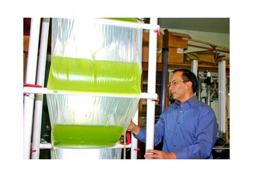 UA researcher Joel Cuello designed the Accordion photobioreactor, which lets scientists control growth conditions for algae while producing them on a large scale.