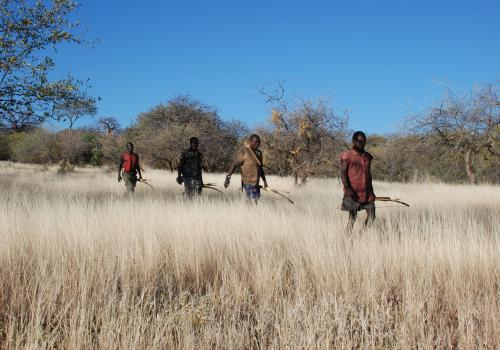 The Hadza use bows and poison-tipped arrows to hunt big game.