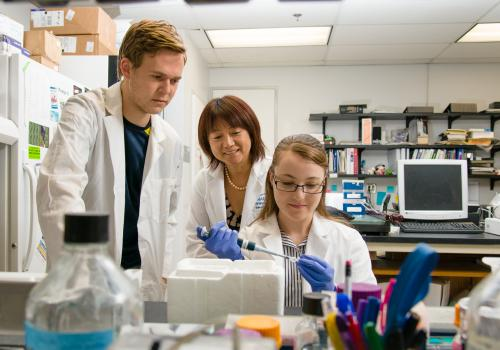 Researchers in the lab of Donna Zhang, professor of pharmacology and speaker at the NIEHS meeting, study environmental effects on the molecular mechanisms of liver cirrhosis.