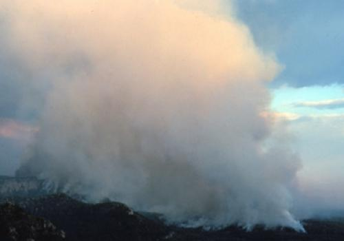 Forest fire rages in Siberia.