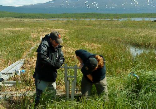 Members of the research team take soil samples from thawed permafrost to analyze for microbial communities.
