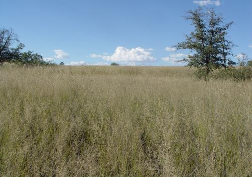 Mixed grasslands like this one near Sonoita, Arizona, cover much of the earth's surface.