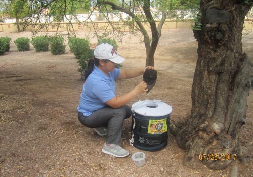 A UA researcher checks a mosquito trap in Maricopa County.