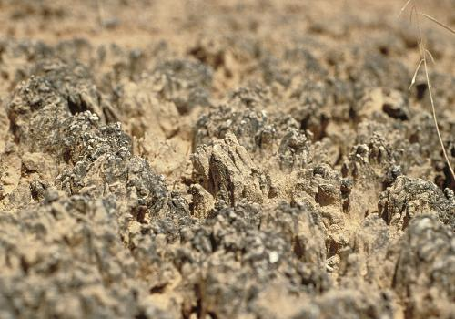 Canyonlands en miniature: mature crusts of the Colorado Plateau, viewed up close