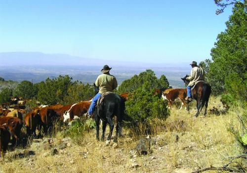 Arizona's publicly owned rangelands cover more than 8 million acres, and the livestock division of agriculture, alone, boosted the state's economy by more than $3 billion last year.