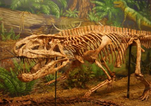 Postosuchus, a Triassic archosaur housed at the Museum of Texas Tech University in Lubbock, Texas, is a member of the dinosaur group from which birds and crocodiles descended.