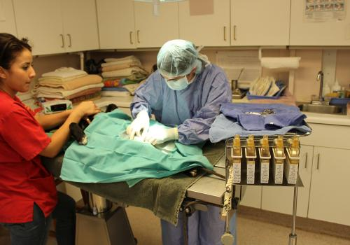 Surgery is conducted on a dog in an animal shelter veterinary facility.