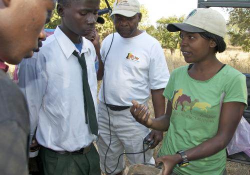 Thandiwe Mweetwa explains how she uses radio collars to track the movement of lions in the field.