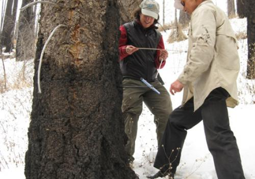 Connie Woodhouse and Mark Losleben of the UA examine a tree-ring core from a drought-stressed Douglas fir tree in the Santa Rita Mountains south of Tucson, Ariz.