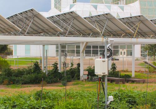 A traditional open-sky garden is situated next to an agrivoltaics system, in which plants are grown under solar photovoltaic panels. The study was conducted at the Biosphere 2, which can be seen in the background.