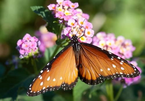 Insects are a group in which feeding on plants increases rates of species proliferation, including among the butterflies and moths, which are almost all herbivorous