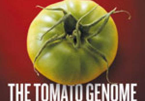 The complete tomato genome sequence is published as a cover article in Nature.