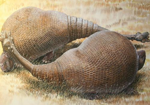 An illustration of two male glyptodonts  facing off: The massive, club-shaped tails were probably used more for intraspecific combat than defense against predators.