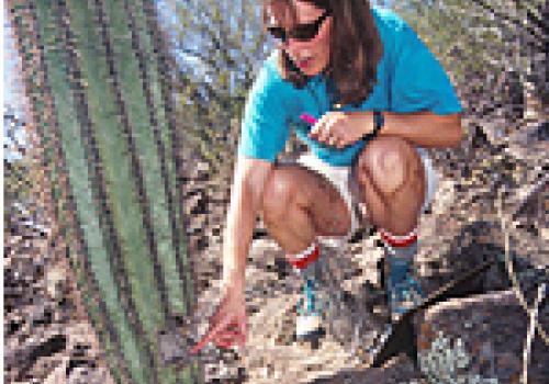 Pierson points to a saguaro scar