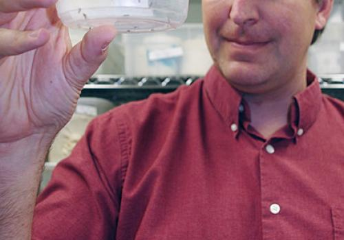 Michael Riehle, holding genetically altered mosquitoes, and his team work in a highly secure lab environment to prevent their study subjects from escaping.