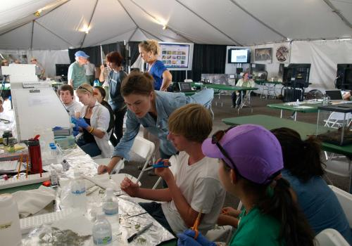 Inside the science tent, high school students prepare the plant samples they collected in the field to be tested for endophytes living in the plant tissue. Photo: