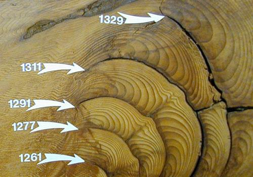 This cross-section of a giant sequoia tree shows some of the tree-rings and fire scars. The numbers indicate the year that a particular ring was laid down by the tree.