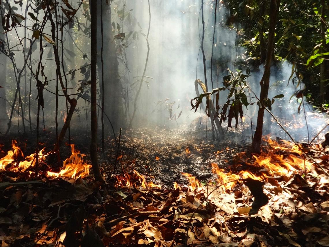 Anel de fogo: a fumaça sobe pelo sub-bosque de uma floresta na região amazônica. As plantas e os animais da floresta tropical evoluíram em grande parte sem o fogo, por isso carecem das adaptações necessárias para lidar com ele. Foto: Paulo Brando