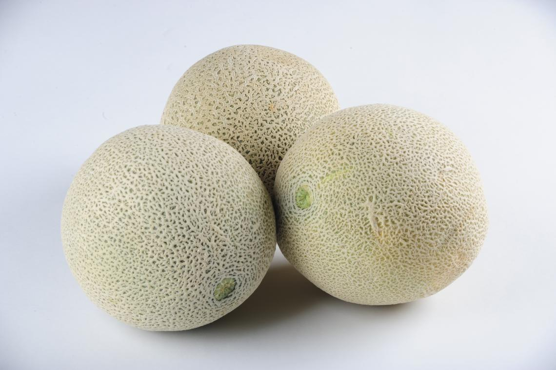 The cantaloupe's rough skin makes an ideal surface on which microbes can find a home.