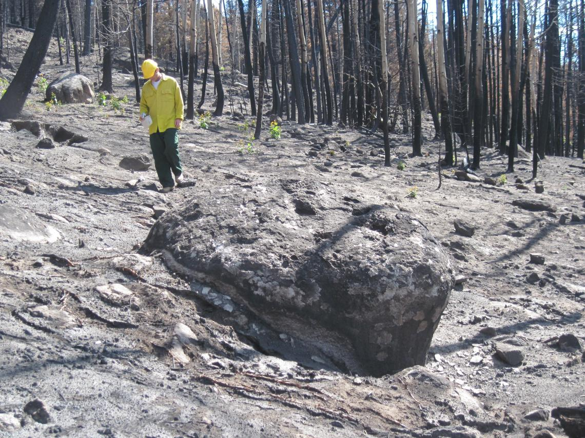 Jon Pelletier, a UA professor of geosciences, walks through the forest on Cerro del Medio, a mountain in New Mexico's Valles Grande, after the 2011 Las Conchas fire.