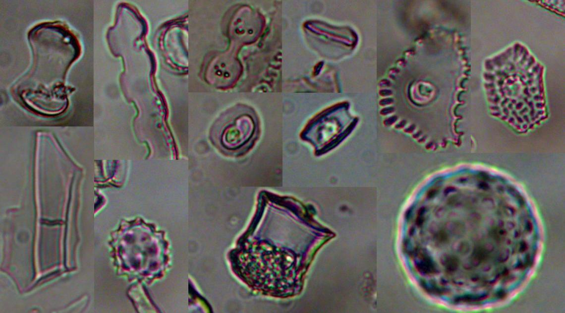 Microscopic plant remains, called phytoliths, from grasses, sedges, palms, forbs, and trees that lived near Lake Malawi in East Africa about 74,000 years ago