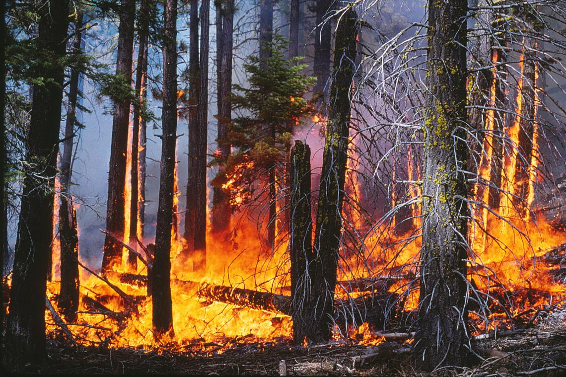 The low-to-moderate intensity surface fire in this prescribed burn will lower the fuel load in this forest in the Lake Tahoe Basin.