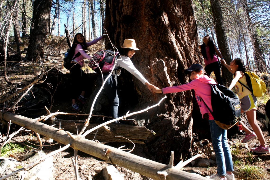 """Students link hands around the """"grandfather tree,"""" an ancient pine tree near the Mt. Lemmon SkyCenter."""