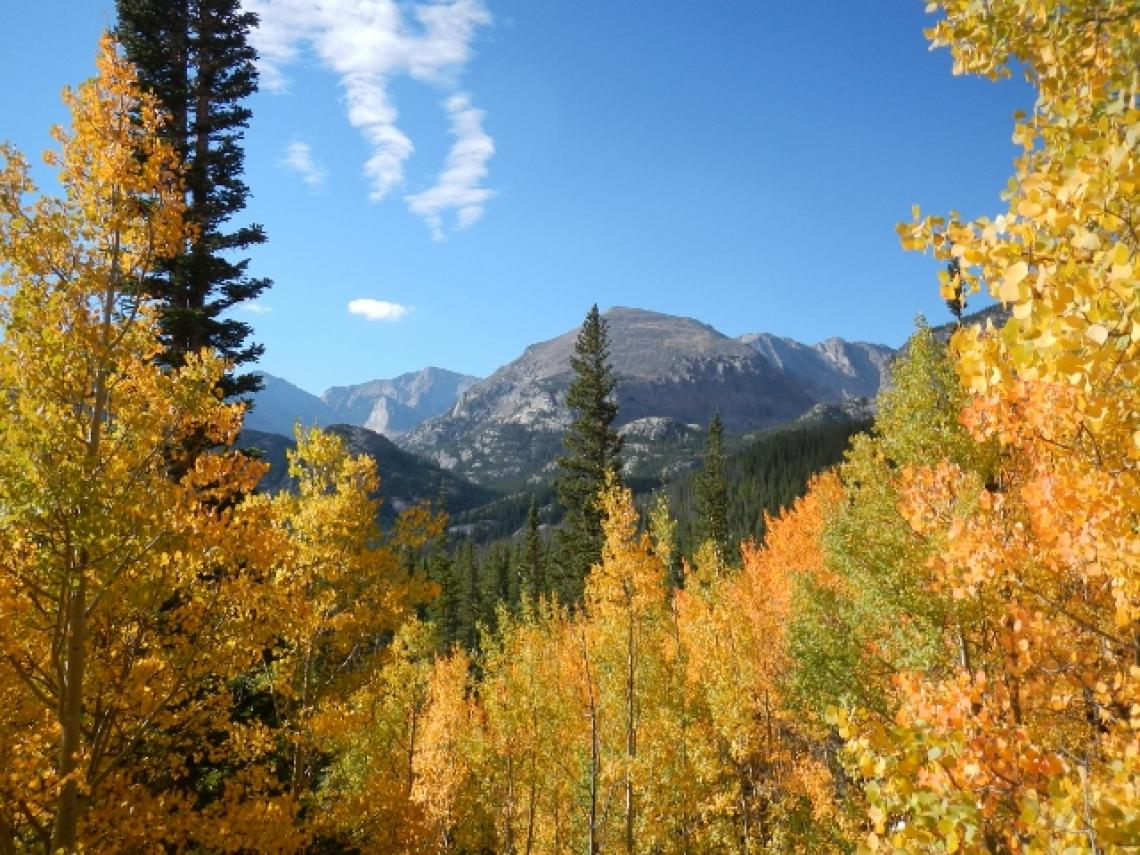 A sub-alpine forest in Colorado. Forests in the southwestern U.S. are expected to be among the hardest hit, according to the projections resulting from the study.