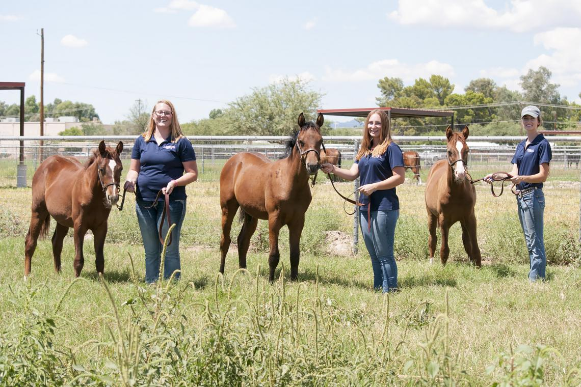 Equine sciences students gain valuable hands-on experience working with young horses at the UA Equine Center. From left are junior Zoie Spurr, senior Norielle Ziemann and junior Megan Hanson.