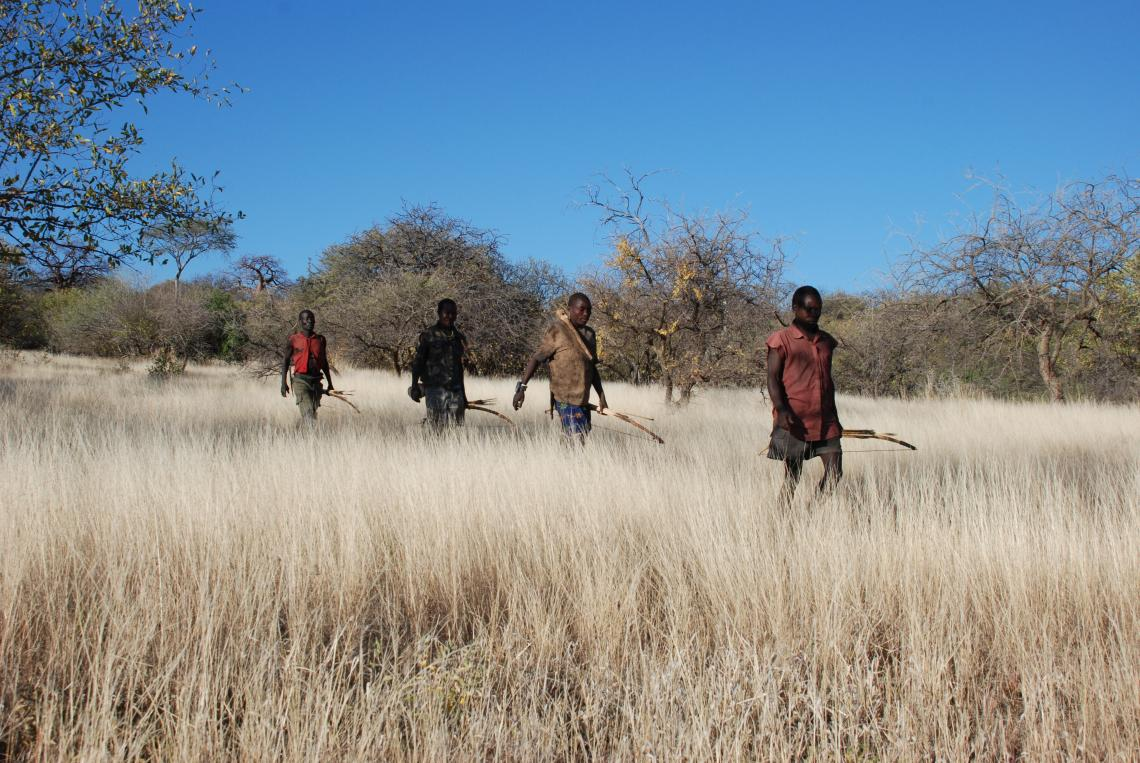 The Hadza people of Tanzania wore wristwatches with GPS trackers that followed their movements while hunting or foraging. Data showed that humans join a variety of other species including sharks and honeybees in using a Lévy walk pattern while foraging.