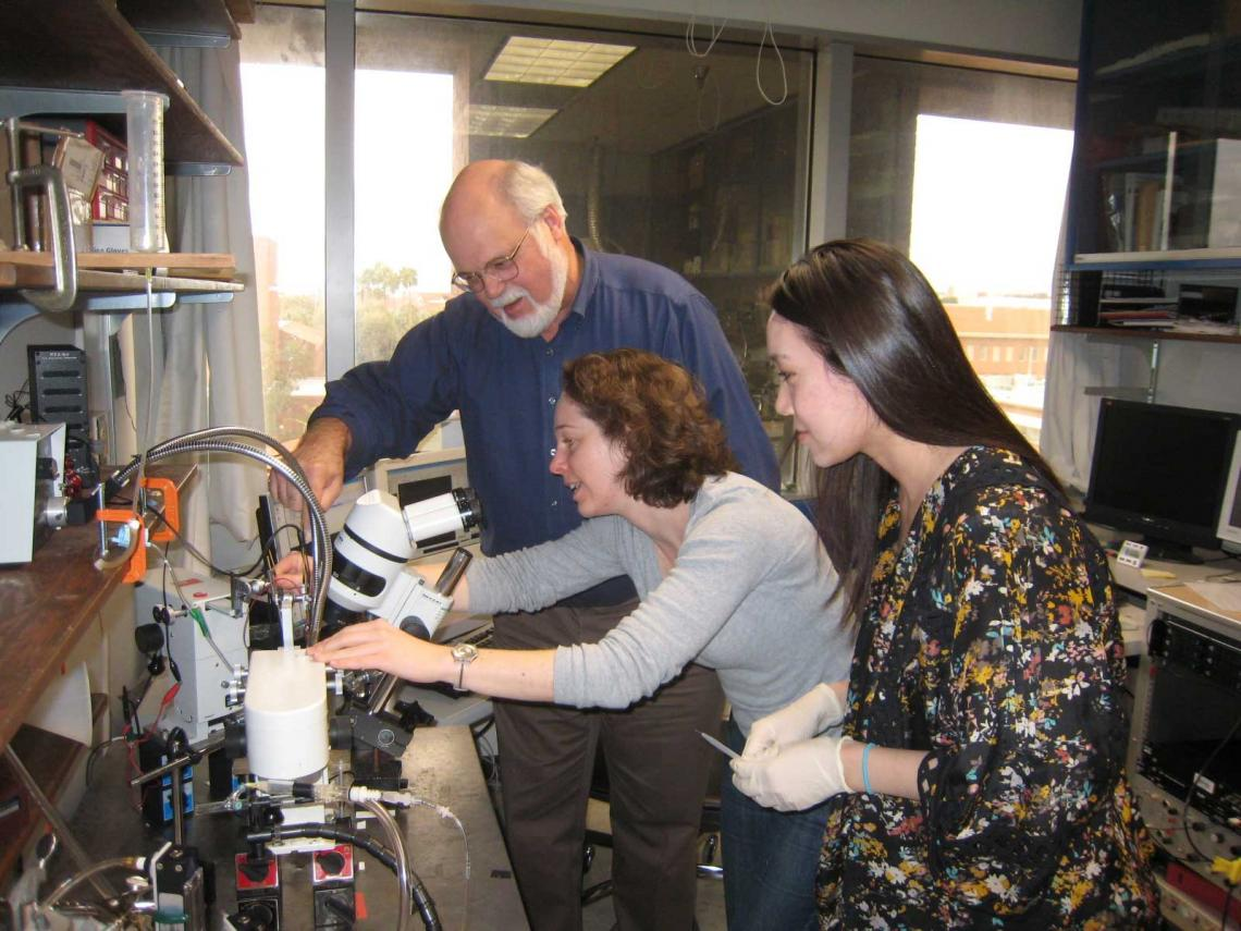 Regents' Professor John G. Hildebrand working with a former postdoctoral fellow and an undergraduate researcher in his lab.