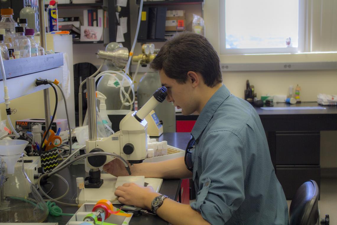 Jeremiah Pate inspects fruit flies under a microscope in the Zarnescu lab.