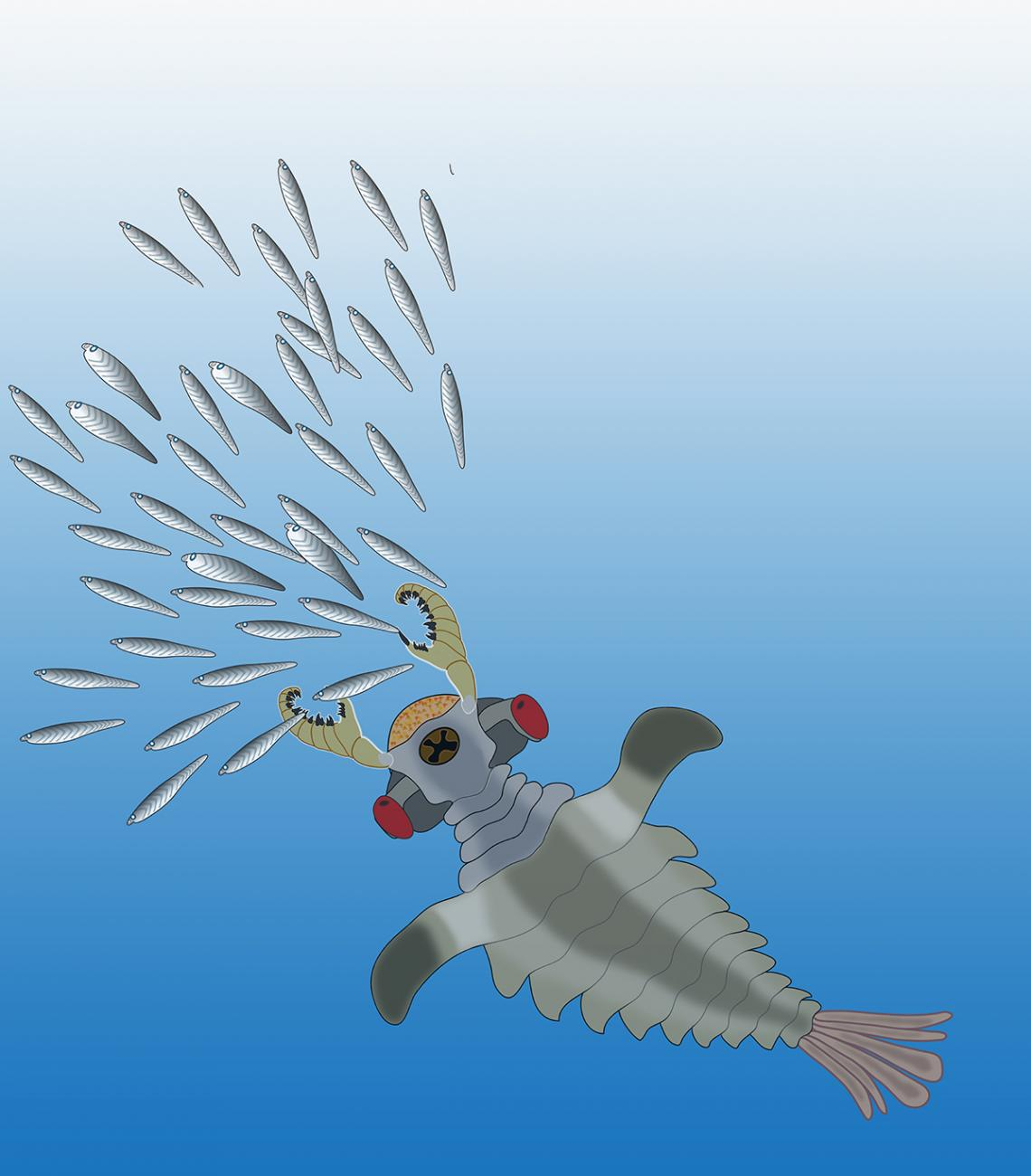 Artist's impression of Lyararapax, one of the species of the world's first predators, the anomalocaridids, chasing its possible prey, primitive fishes that also existed in the Lower Cambrian.
