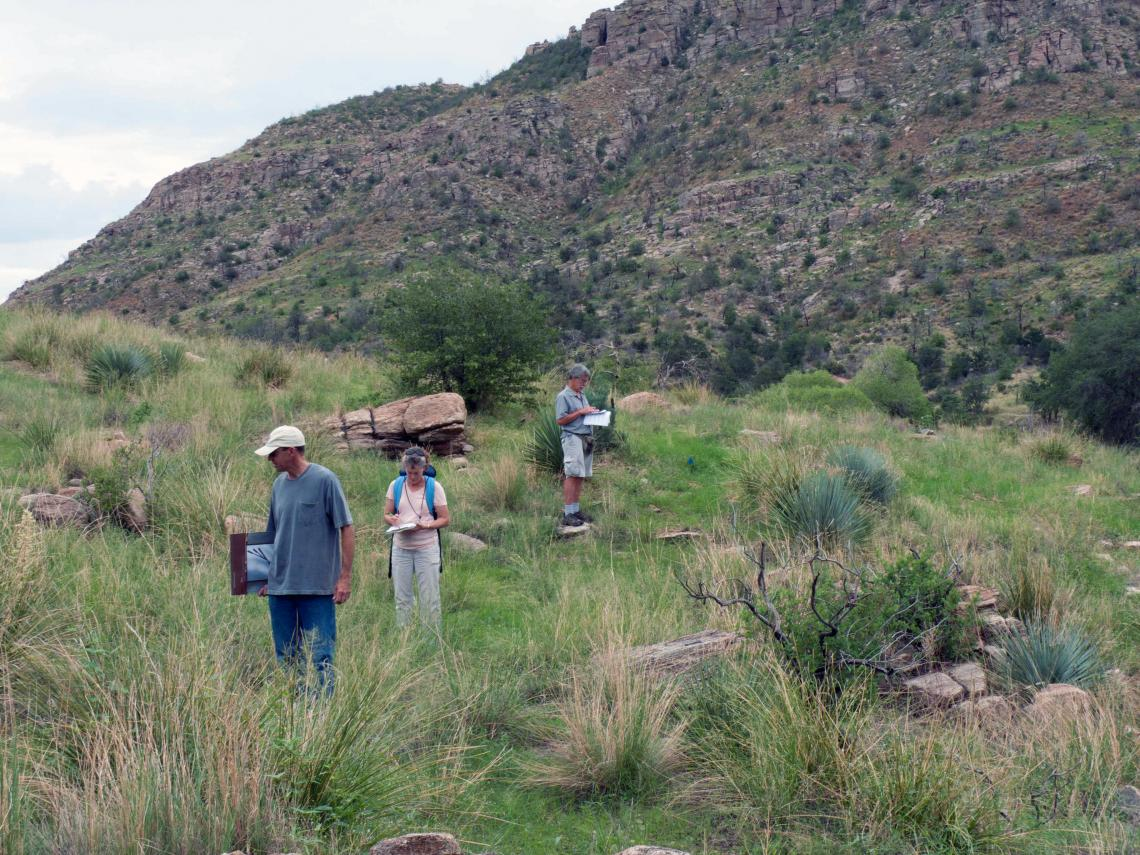 The researchers assessed plants growing at different elevations in the same areas surveyed by botanists 50 years ago.