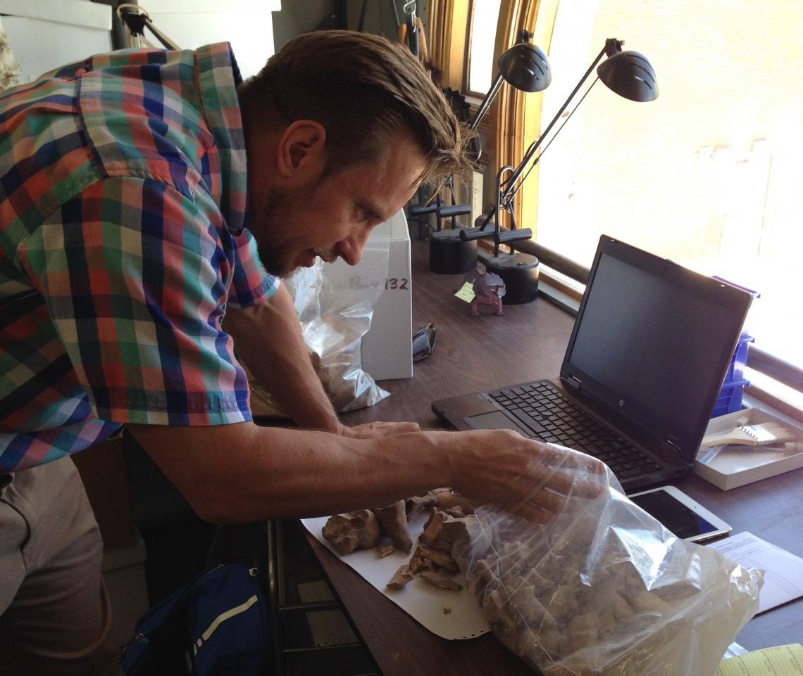 Alex Ruff sorts livestock teeth in the UA's zooarchaeology lab.