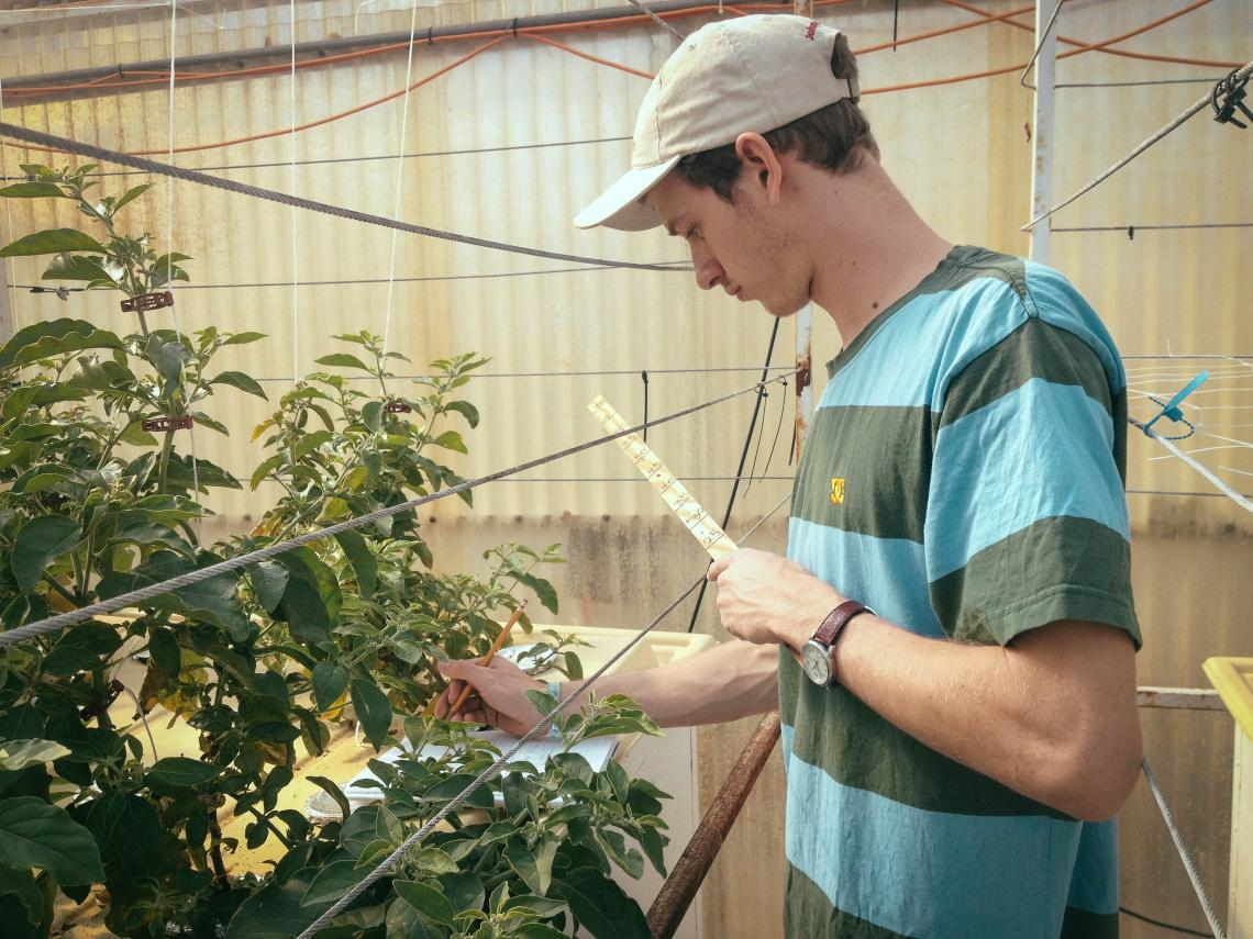 Von Bieberstein measures the average leaf size and height of each plant weekly to collect data on growth.