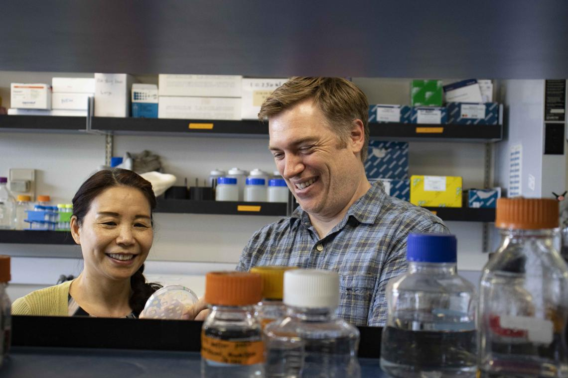 From left: Senior Research Scientist Xiangxia Luo and Andrew Capaldi, associate professor of molecular and cellular biology, examine cell lines they built that allow them to turn the TOR and PKA pathways on and off using drugs.