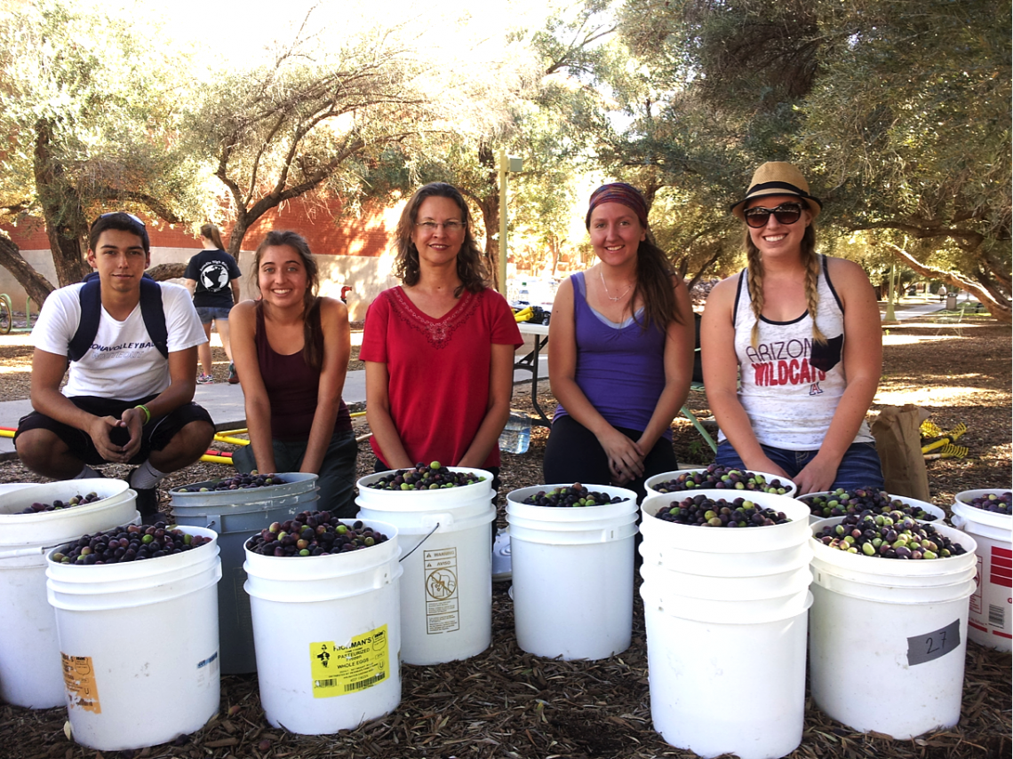 From left: Undergraduate volunteer Michael George Bernal, undergraduate intern Tori Scaven, LEAF co-PI Melanie Lenart, and undergraduate LEAF interns Ashley Hodes and Haley Anderson show off the olives picked at the harvest on Nov. 11.