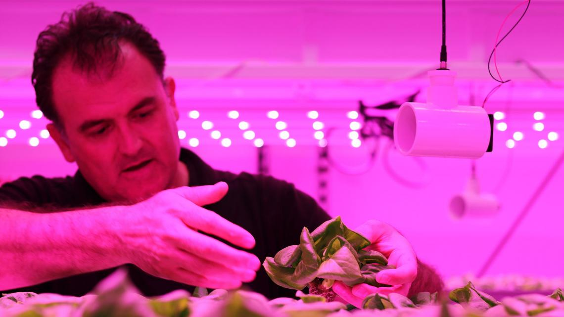 Murat Kacira, professor of biosystems engineering, works in the Controlled Environment Agriculture Center.