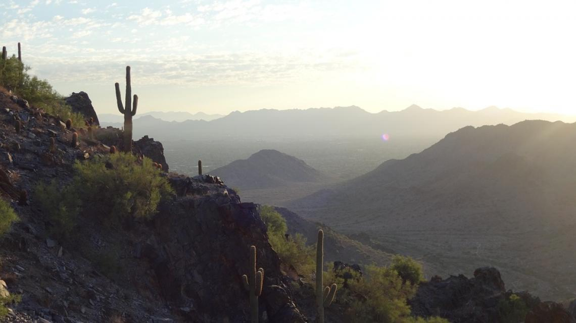 Local variations in topography could buffer saguaros from the harsh realities of climate change.