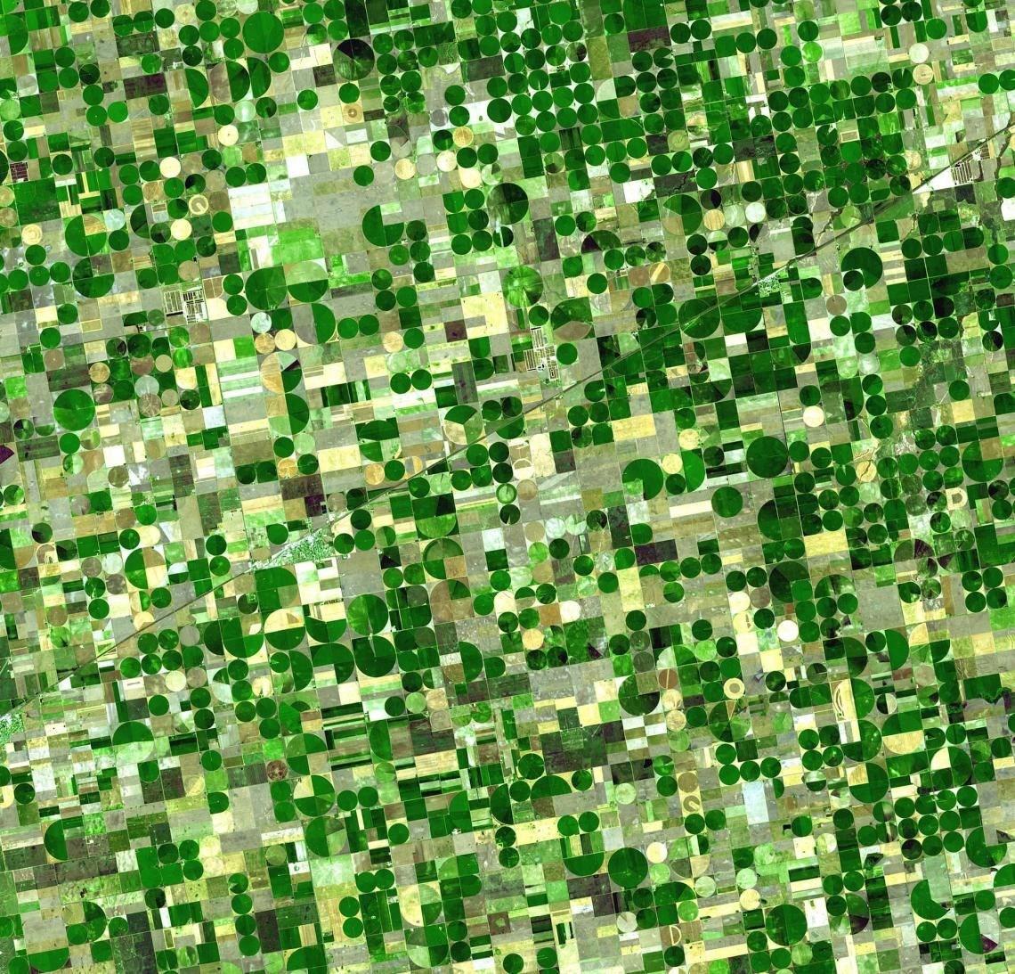 The green circles in this satellite image of southwestern Kansas are crops being watered by central pivot irrigation, which draws water from a well in the center of each field. Some of the water is groundwater from deep under the Great Plains states.