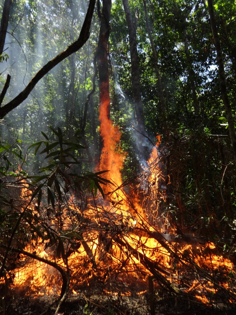 Flames lick up a tree trunk during a forest fire in the Amazon