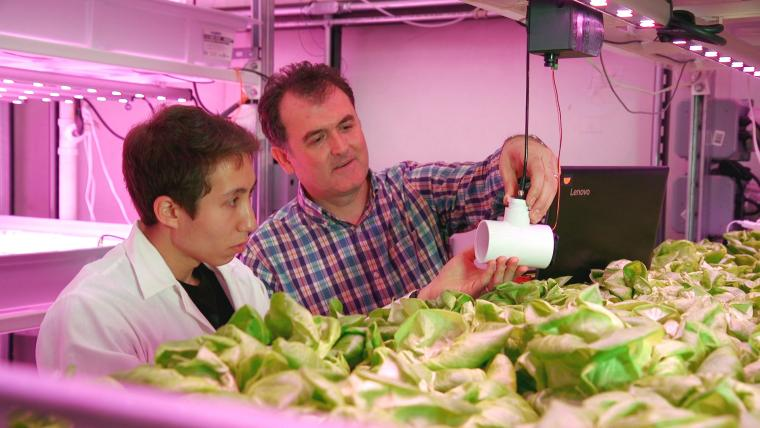 Brian Caplan and Murat Kacira examine one of the environmental sensors in the Urban Agriculture Vertical Farm Facility. Part of Caplan's graduate research revolves around examining plant responses to light and airflow.