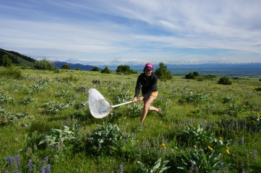 Citizen scientist catches butterfly with a net in a field