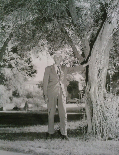 Robert H. Forbes stands next to a campus olive tree in 1958.