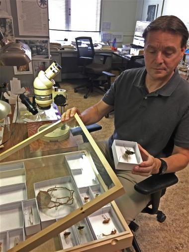 Gene Hall's position is jointly funded by the University of Arizona's College of Agriculture and Life Sciences, where he manages the insect collection, and CALS Cooperative Extension, which has him provide outreach services to the community and share his