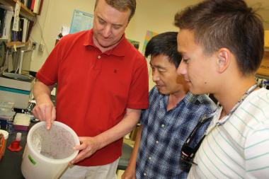 Roger Miesfeld and UA Assistant Research Scientist Jun Isoe evaluate a storage container with mosquitoes used to study ways to interfere with the insects' ability to transmit diseases. Miesfeld's son, Barrett , has joined the lab as a summer undergraduate