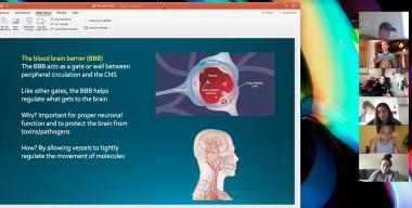 A screenshot from one of Matthew Grilli's online lectures on the brain.